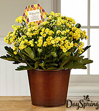 DaySpring® Thankful Heart Fall Kalanchoe
