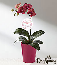 DaySpring® Way to Your Heart Valentine Orchid