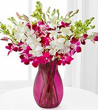 Orchid Illumination Bouquet - 10 Stems