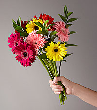 Colorful World Gerbera Daisy Bouquet - 15 Stems