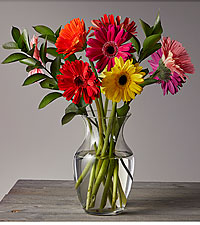 Colorful World Gerbera Daisy Bouquet - 15 Stems - Vase Included