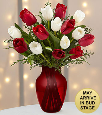 Merry Moments Holiday Tulip Bouquet- 15 Stems- RED VASE INCLUDED