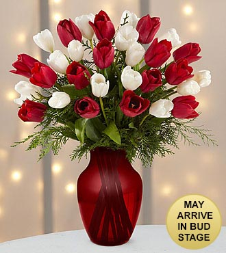 Merry Moments Holiday Tulip Bouquet - 30 Stems- RED VASE INCLUDED