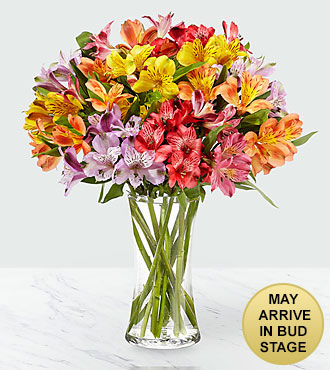 The FTD® Pick Me Up® Rainbow Discovery Peruvian Lily Bouquet - 50 Blooms - VASE INCLUDED