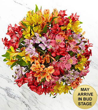 Rainbow Discovery Peruvian Lily Bouquet - 100 Blooms - No Vase