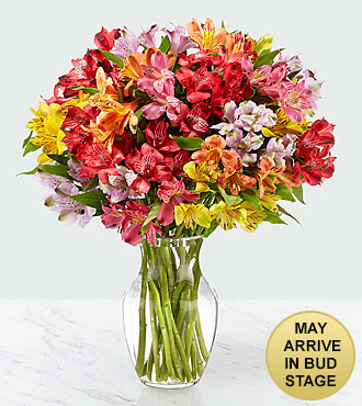 Rainbow Discovery Peruvian Lily Bouquet - 100 Blooms - VASE INCLUDED