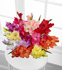 Look to the Rainbow Gladiolus Bouquet - 10 Stems - No Vase