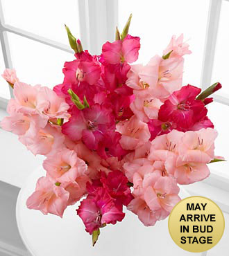 Pinking of You Gladiolus Bouquet - 10 Stems - No Vase