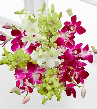 Orchid Illumination Bouquet -10 Stems - No Vase