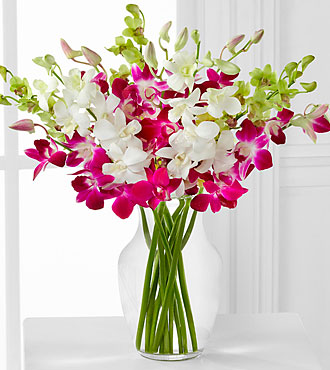 Orchid Illumination Bouquet - 10 Stems - VASE INCLUDED
