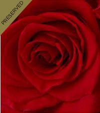 The Red Keepsake Rose™ by FTD® - Single Long Stem
