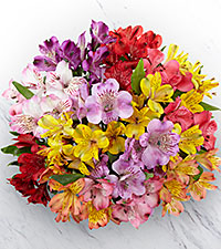 The FTD® Pick Me Up® Rainbow Discovery Peruvian Lily Bouquet - 13 Stems, No Vase