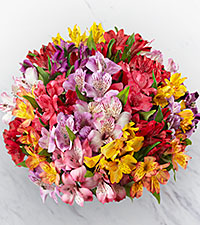 The FTD® Pick Me Up® Rainbow Discovery Peruvian Lily Bouquet - 100 Blooms - No Vase