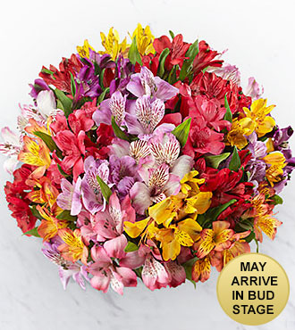 The FTD® Pick Me Up® Rainbow's Discovery Peruvian Lily Bouquet - 25 Stems - NO VASE