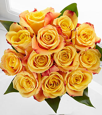 Elite™ Optimism Rose Bouquet - 12 Stems of 18-inch Roses - No Vase