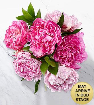 Peony Perfect Bouquet - No Vase