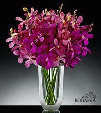 Alluring Elegance Luxury Orchid Bouquet in Rogaska Crystal Gondola Vase