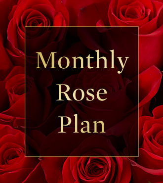 Monthly Rose Gift Plan
