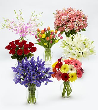Flowers of the Month - 1 Year with Vase