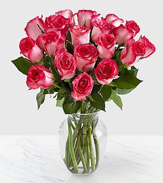 18 Pink Milkshake Roses