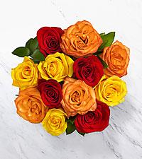 12 Autumn Roses