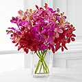 Tickled Pink Orchid Bouquet - VASE INCLUDED