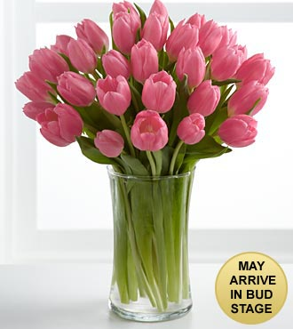 Pink Prelude Tulip Bouquet - 30 Stems - VASE INCLUDED