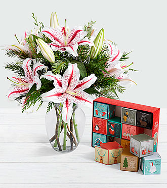 Candy Cane Lilies with 12 Days of Christmas Cocoa