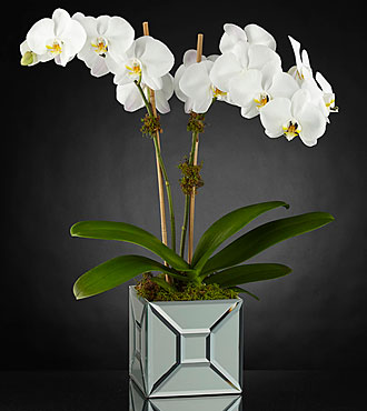 The FTD® Elegant Impressions™ Luxury Orchid - VASE INCLUDED