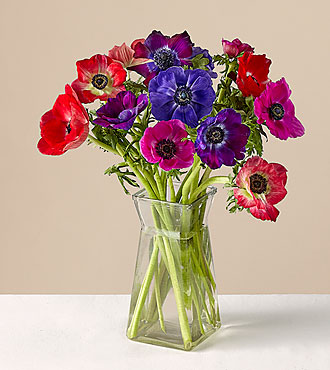 Multicolored Anemone Bouquet with Vase