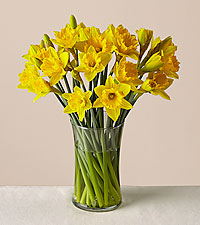Yellow, Gorgeous Daffodil Bouquet
