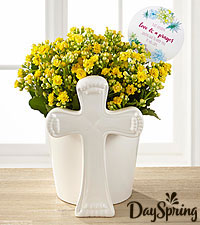 DaySpring Brighter Days Kalanchoe