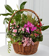 Dish Garden FTD Flowers Roses Plants and Gift Baskets