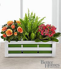 The FTD® Spring Surprises Plants by Better Homes and Gardens®