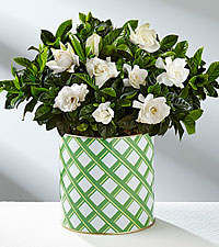 Nothing But Love Mother's Day Gardenia