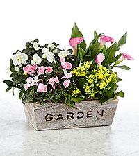 Come to My Garden Windowbox