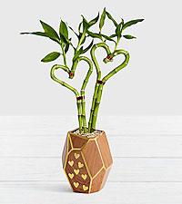Double Love Heart Bamboo