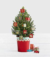 12 Days of Chocolate Spruce Tree