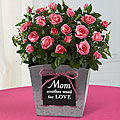 Mom is Love 6.5-inch Mini Rose Plant