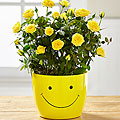 Sending a Smile Mini Rose Plant