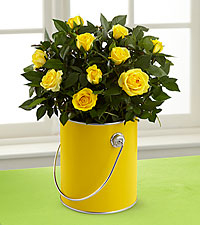 The Color Your Day with Sunshine™ Mini Rose Plant by FTD®
