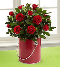 The Color Your Day with Love™ Mini Rose Plant by FTD®