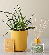 Find Balance – Grounding Aloe Kit