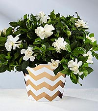 You Are Loved Valentine's Day Gardenia