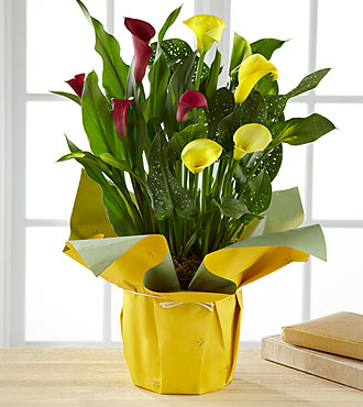 Color Inspirations Calla Lily - GOOD