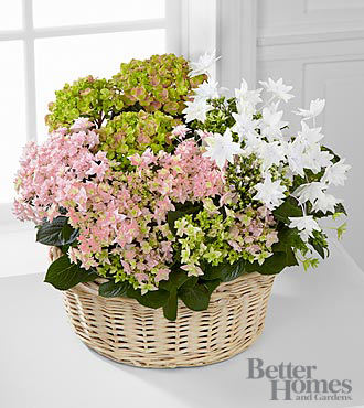 The FTD® Forever Love Mother's Day Assorted Hydrangea Basket by Better Homes and Gardens®