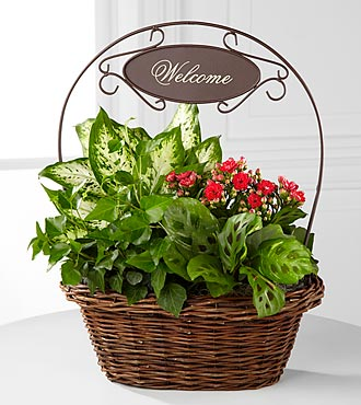 Welcome Home Dish Garden