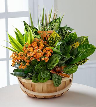 WonderFall Wishes Harvest Dish Garden