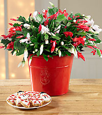Make It Merry Christmas Cactus with Frosted Sugar Cookies