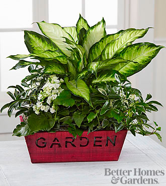 The FTD® Christmas to Remember Holiday Dish Garden by Better Homes and Gardens™